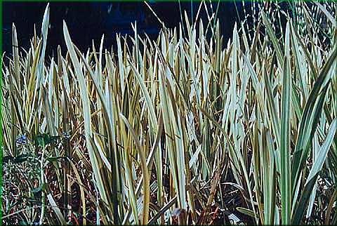 Les plantes aquatiques - Noms de plantes aquatiques ...